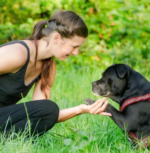 Muskelaufbau Hundephysio