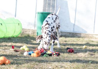 Viele Hundespielzeuge Hundepension Hundephysio Wilsdruff
