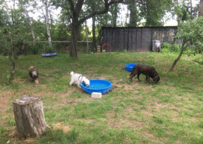 Hundepension Hundephysio Wilsdruff Tibet Terrier Bademuschel