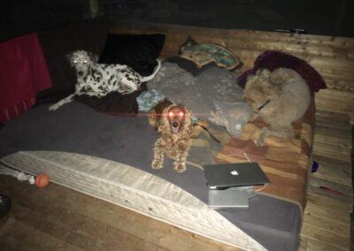 Schlafen unterm Sternenhimmel Hundepension Hundephysio Wilsdruff