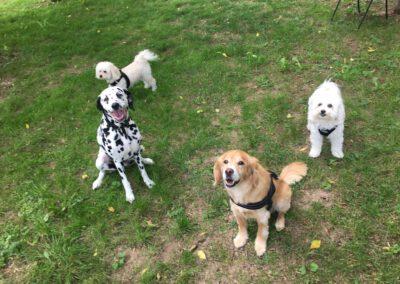 Hundepension Hundephysio Wilsdruff Spielgruppe