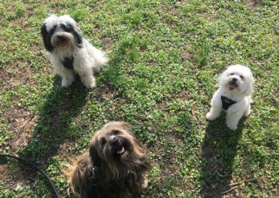 Hundepension Hundephysio Wilsdruff Gasthunde