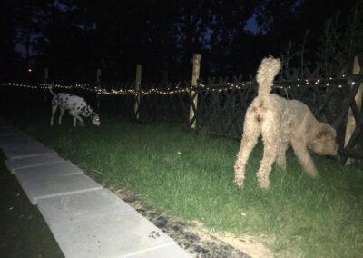 Hundepension Hundephysio Wilsdruff bei Nacht