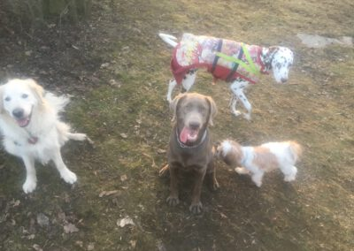 Spielende Hunde Hundepension Hundephysio Wilsdruff