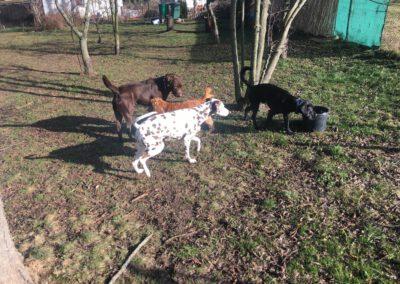 Hundepension Hundephysio Wilsdruff Bulli-Mix Gruppe