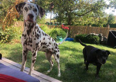 Hallo Frauchen Hundepension Hundephysio Wilsdruff