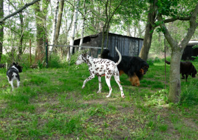 Hundepension Hundephysio Wilsdruff Franz. Bulli Gruppe