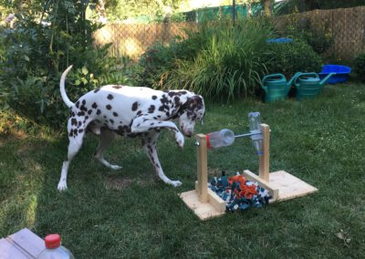 Hundepension Hundephysio Wilsdruff Denkspielzeug