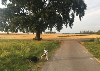 Gassigehen Hundepension Hundephysio Wilsdruff