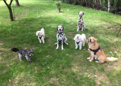 Zauberhunde Hundephysiotherapie Tierheilpraxis Dresden