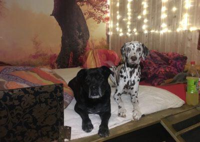 Schlafzimmer Hundepension Hundephysio Wilsdruff
