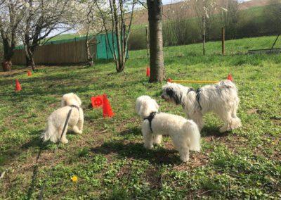 Hundepension Hundephysio Wilsdruff Tibet Terrier und Bolonka