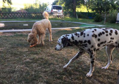 Hundepension Hundephysio Wilsdruff Kauspielzeug