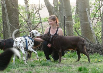 Ich und die Hunde Hundepension Hundephysio Wilsdruff