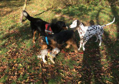 Hundepension Hundephysio Wilsdruff Airdale Terrier