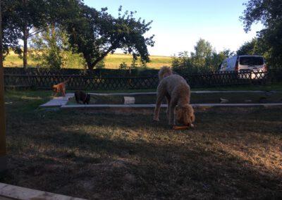 Hundepension Hundephysio Wilsdruff Königspudel Spielzeug