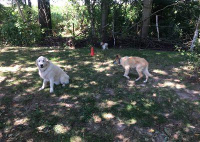 Hundepension Hundephysio Wilsdruff Tierschutzhund