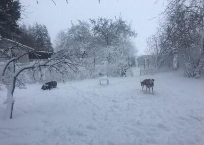 Hundepension Hundephysio Wilsdruff Winter Schnee