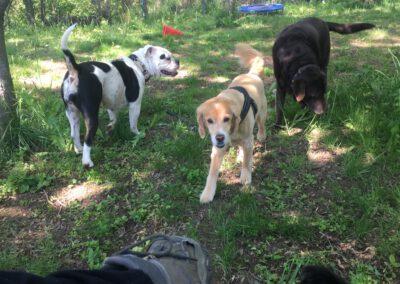 Hundepension Hundephysio Wilsdruff Bulldogge und Tierschutzhund