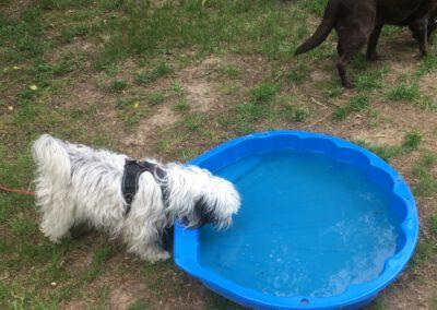 Hundepension Hundephysio Wilsdruff Tibet Terrier