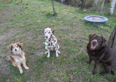 Hundepension Hundephysio Wilsdruff Labrador und Tierschutzhund