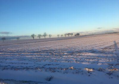 Winter in der Hundepension Hundephysio Wilsdruff