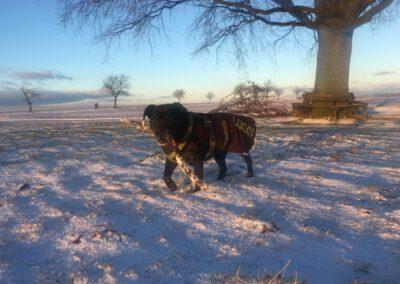Hundepension Hundephysio Wilsdruff Bulldog-Mix Schnee