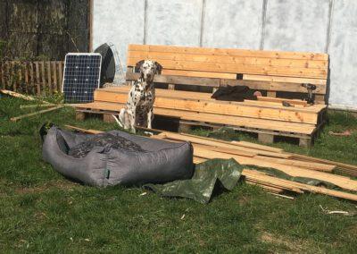 Handwerker Hundepension Hundephysio Wilsdruff