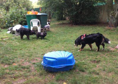 Hundepension Hundephysio Wilsdruff Bunte Truppe