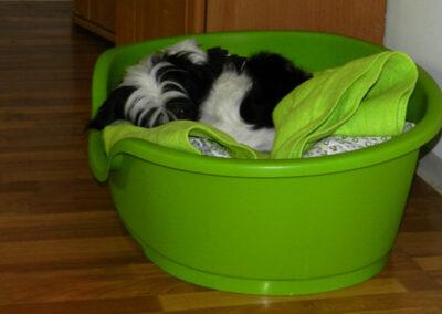 Schlafenszeit Hundepension Hundephysio Wilsdruff