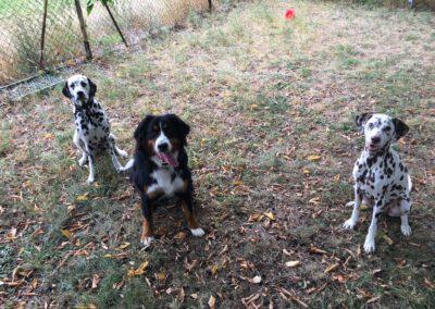 Hundepension Hundephysio Wilsdruff Dalmatiner und Sennenhündin