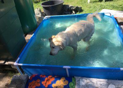 Hundepension Hundephysio Wilsdruff Golden Retriever badet