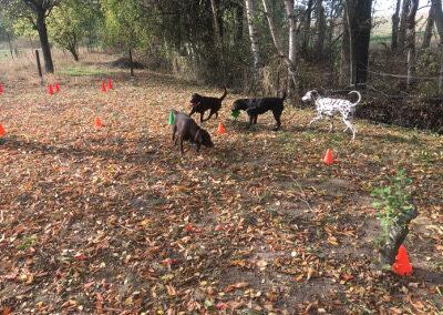 Hundepension Hundephysio Wilsdruff Labrador Herbst