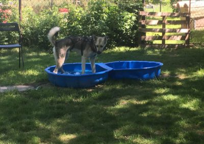 Hundepension Hundephysio Wilsdruff Bademuschel zu klein