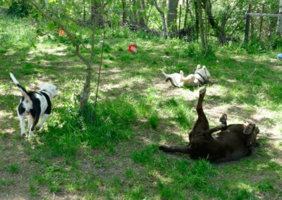 Zauberhunde Hundephysiotherapie Hundebetreuung Wilsdruff Dresden