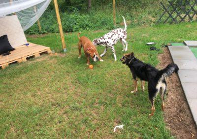 Hundepension Hundephysio Wilsdruff Conti Bulldog