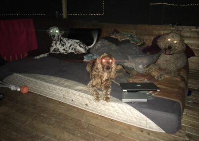 Hundepension Hundephysio Wilsdruff Sommerbett Hundeliege