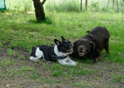 Hundepension Hundephysio Wilsdruff Bulli und Labbi