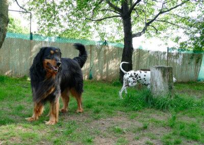 Hundepension Hundephysio Wilsdruff Hovawart Hündin