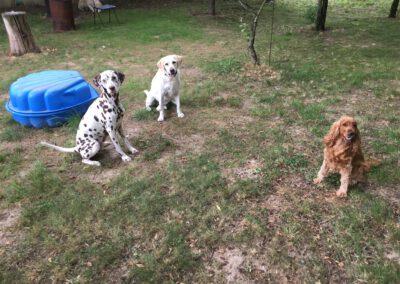 Hundepension Hundephysio Wilsdruff Sitz im Garten