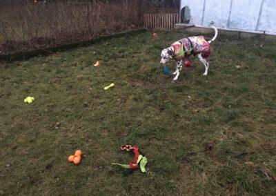 Hundepension Hundephysio Wilsdruff Hundespielzeug