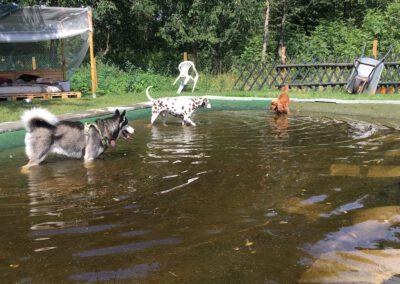 Zauberhunde Hundephysiotherapie Tierheilpraxis Wilsdruff Dresden