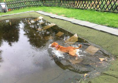 Hundepension Hundephysio Wilsdruff Continental Bulldogge