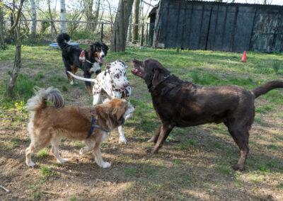 Hundepension Hundephysio Wilsdruff Labrador Prinz