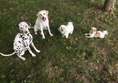 Hundepension Hundephysio Wilsdruff Labrador