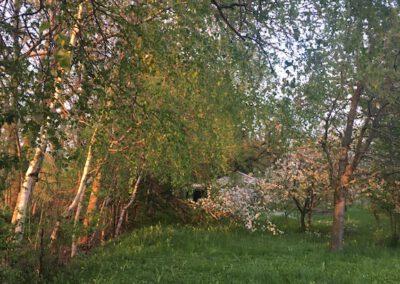Garten im Frühling Hundepension Hundephysio Wilsdruff