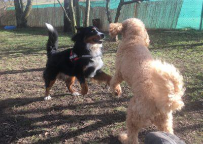 Hundepension Hundephysio Wilsdruff best friends