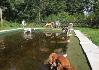 Hundepension Hundephysio Wilsdruff Teichtoben
