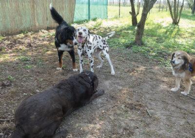 Hundepension Hundephysio Wilsdruff Spielkumpels