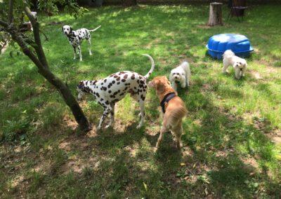 Hundepension Hundephysio Wilsdruff Punktealarm